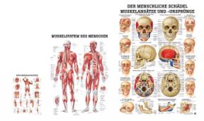 Anatomische Lehrtafeln