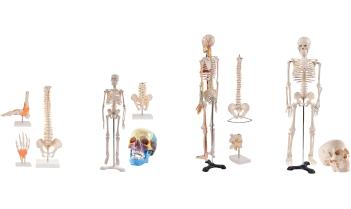 Anatomie Sets