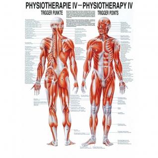 """Lehrtafel """"""""Physiotherapie IV - Trigger Punkte"""""""