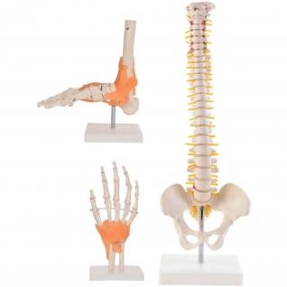 Anatomie Set 1