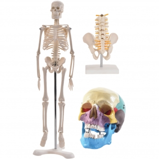 Anatomie Set 2