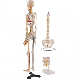 Anatomie Set 3