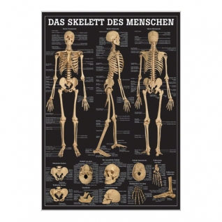 """Miniposter """"Das Skelett des Menschen"""""""