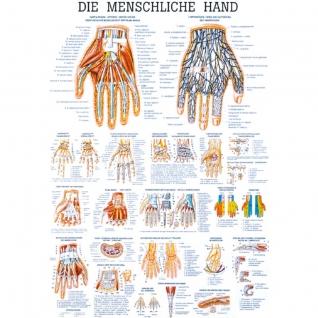 """Lehrtafel """"Die menschliche Hand"""""""