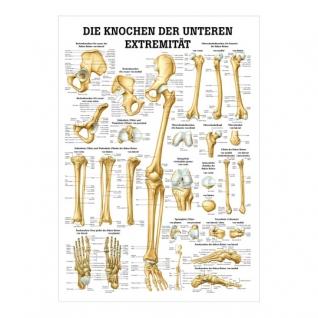 """Miniposter """"Die Knochen der unteren Extremitäten"""""""